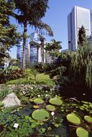Hong Kong Park, Central, Hong Kong Island, Hong Kong, China, Asia