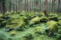 Mossy rocks, Reserve Forest, Manali, Himachal Pradesh state, India, Asia 20025323386  写真素材・ストックフォト・画像・イラスト素材 アマナイメージズ