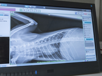Monitor screen with x-ray of torso in a veterinary clinic