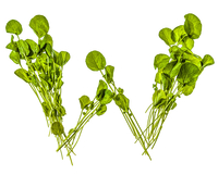 Letter W Made of Watercress