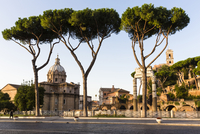 Pine trees on Via dei Fori Imperiali in front of Santi Luca e Martina, Caesar's Forum and the Temple of Venus Genetrix at sunris 20025324108| 写真素材・ストックフォト・画像・イラスト素材|アマナイメージズ
