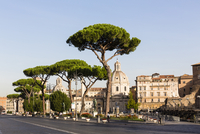 Pine trees on Via dei Fori Imperiali in front of the domes of Santa Maria di Loreto and Santissimo Nome di Maria al Foro Traiano 20025324112| 写真素材・ストックフォト・画像・イラスト素材|アマナイメージズ
