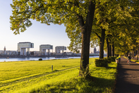 Green belt at the River Rhine in front of the Crane Buildings (Kranhaeuser) and Cologne Cathedral in the distance at sunset, Col 20025324211| 写真素材・ストックフォト・画像・イラスト素材|アマナイメージズ