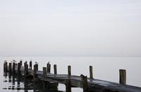 Boardwalk on beach with seagulls