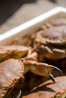 Close up of crabs in a white container
