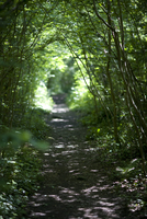 Countryside footpath and bridleway