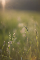 Close up of meadow grass