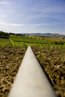 Close up of an irrigation pipe in a corn field