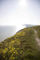 Coastline footpath with sea and yellow flowers