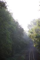 Train tracks through treelined countryside