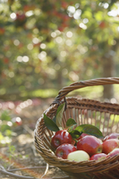 Wicker trug with red apples