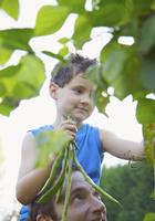 Young boy sitting on man shoulders holding a bunch of runner beans