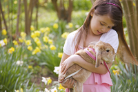 Close up of a young girl holding a lop-eared rabbit in a field of daffodils