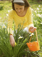 Close up of a young girl searching for an Easter egg between daffodils 20025325148| 写真素材・ストックフォト・画像・イラスト素材|アマナイメージズ