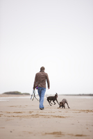 Back view of a man walking dogs on a beach 20025325167| 写真素材・ストックフォト・画像・イラスト素材|アマナイメージズ