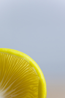 Extreme close up of a yellow oyster mushroom