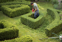Gardener pruning a hedge in a maze with electrical trimmer, elevated view