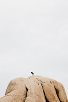Rock Climber On Top Of Boulder