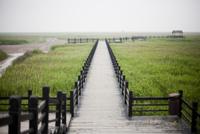 Viewing Platform over Marshland