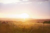 Camper at Sunset 20025326088| 写真素材・ストックフォト・画像・イラスト素材|アマナイメージズ