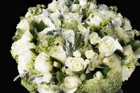 Close up of White Roses and Wild Chervil Flowers