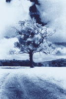 Blue toned image of landscape with tree.