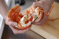 Removing Lobster Tail Meat