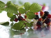 Blackberries and Leaves