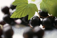 Blackcurrants and Leaves