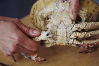 Removing Legs from a Cooked Crab