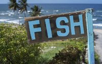 Fish sign on a beach near bathsheba, barbados - editorial use only