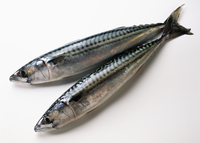 Two fresh mackerel on a white background