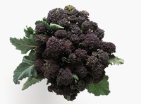 Purple broccoli on a white background