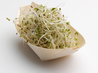 Alfalfa bean sprouts