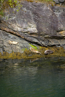 Norway, Fjord Norway, Seals on shore
