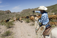 USA, Texas, Dallas, Cowboy and Texas Longhorn Cattles (Bos taurus) 20025327621| 写真素材・ストックフォト・画像・イラスト素材|アマナイメージズ