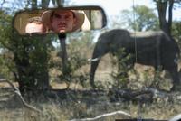 Africa, Botswana, Okavango Delta, Men in car viewing Elephant (Loxodonta africana) 20025327657| 写真素材・ストックフォト・画像・イラスト素材|アマナイメージズ