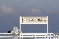 Germany, Baltic Sea, Niendorf, Seagulls sitting on railing