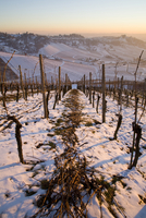Germany, Stuttgart, snow covered vineyard terraces