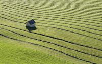Austria, Krimmler Achental, Hay harvest