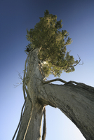 New Zealand, Baobab tree, low angle view