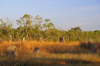 Australia, View of litchfield national park