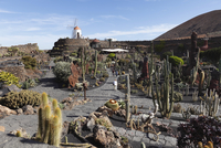 Spain, Canary Islands, Lanzarote, View of cactus garden with windmill in background