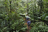 Costa Rica, Las Horquetas, Rara Avis, Tourists in rainforest