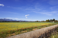 Spain, Mallorca, View of farm land