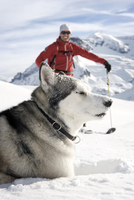 Austria, Man skiing with Avalanche Dog in snow