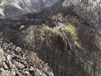 Spain, La Gomera, Fire damage in Garajonay National Park