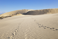 New Zealand, Footprints on Te Paki Sand Dunes