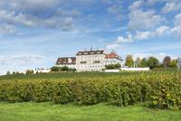 Germany, Baden Wuerttemberg, View of Schloss Kirchberg castle with vineyard