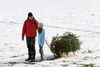 Family taking christmas tree on sledge 20025329793| 写真素材・ストックフォト・画像・イラスト素材|アマナイメージズ